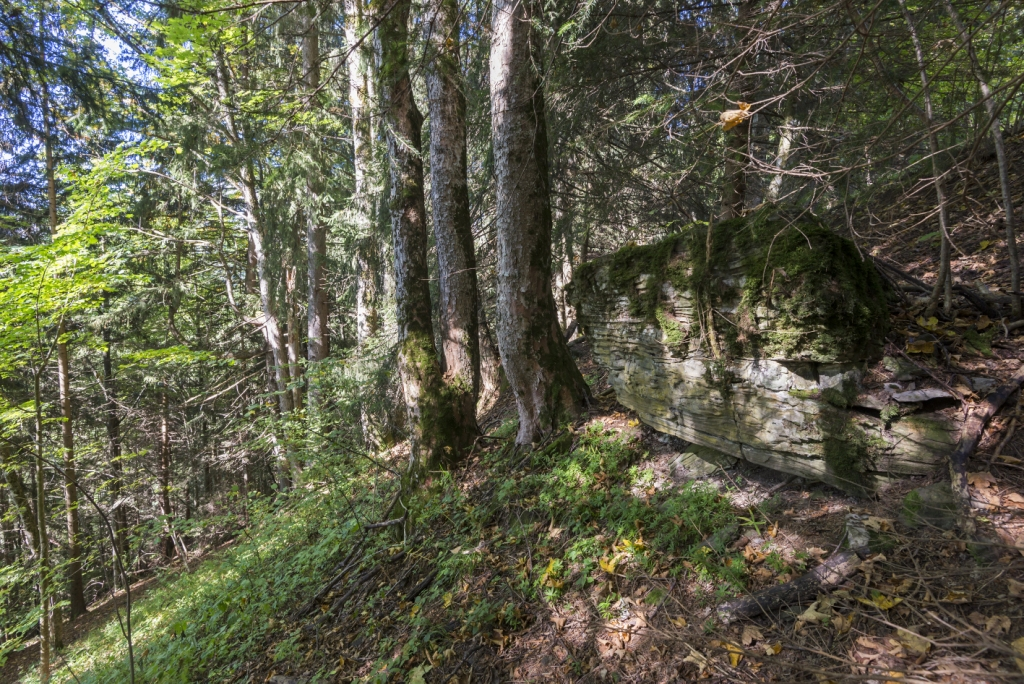 foret protection morzine oct14